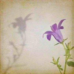 Obraz Reprodukcja Kwiaty Cena Hurtowa  40X40 CM