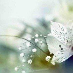 Obraz Reprodukcja Kwiaty Cena Hurtowa  50X50 CM
