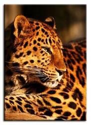 "Obraz ""Wild Nature"" reprodukcja 50x70 cm"