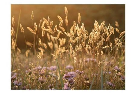 Fototapeta - Awakening ceral field