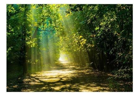Fototapeta - Droga w słońcu