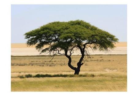 Fototapeta - Etosha National Park, Namibia