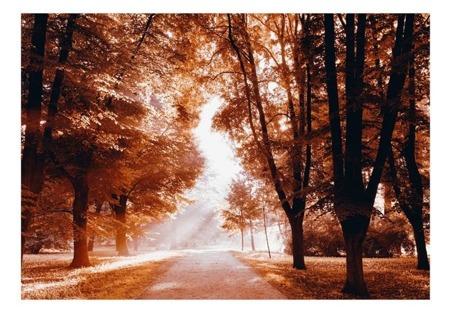 Fototapeta - Jesienny park
