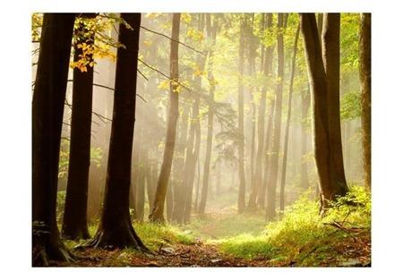 Fototapeta - Mysterious forest path